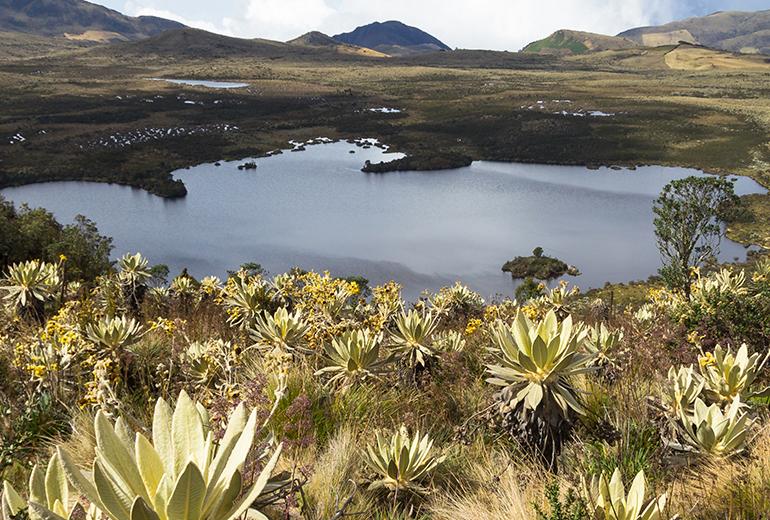 La naturaleza te llama: lugares para hacer ecoturismo en Colombia