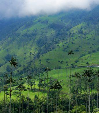 Los parques naturales de Colombia que puedes visitar en carro